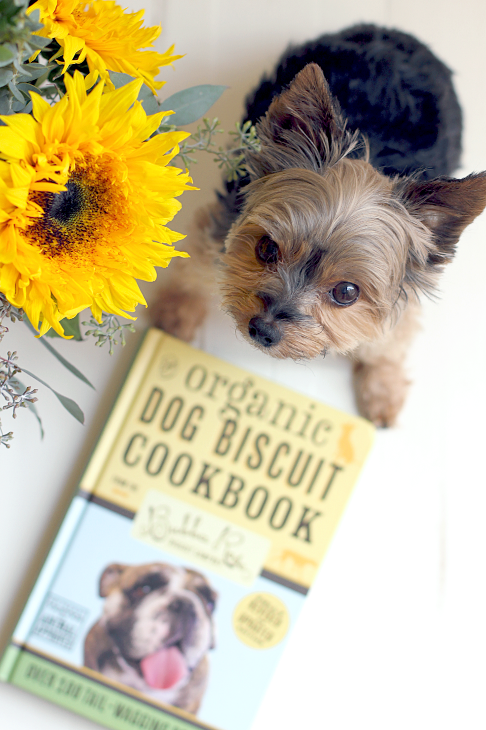 Rookie with Cookbook